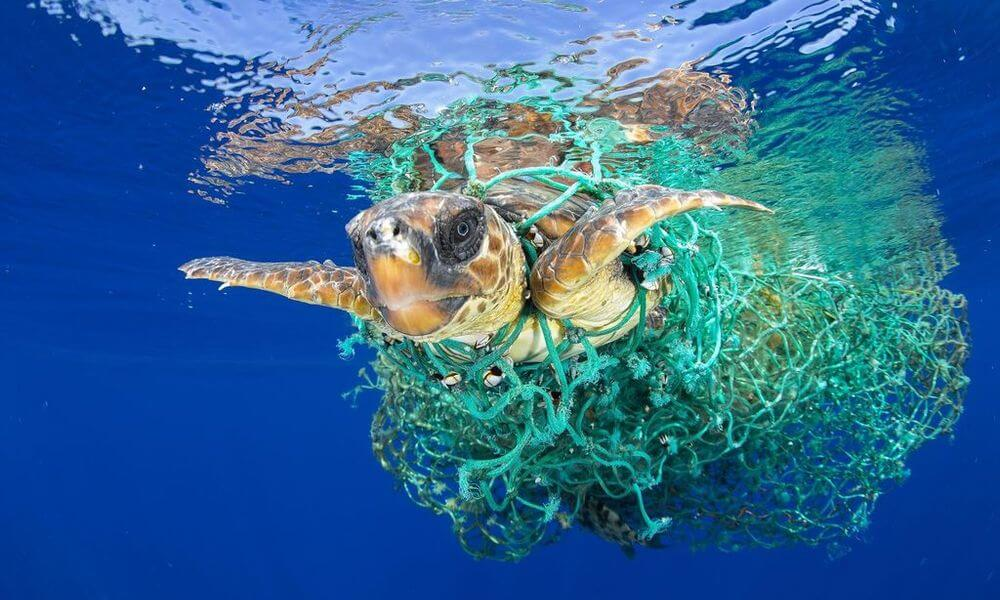 Turtle trapped in fishing nets