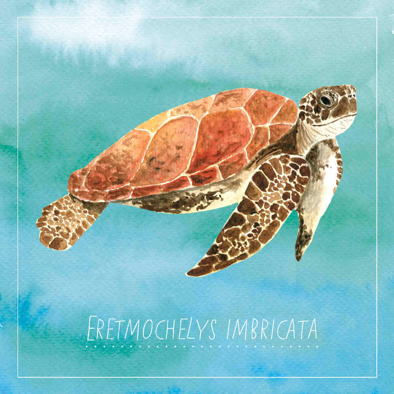 An illustration of a caribbean turtle